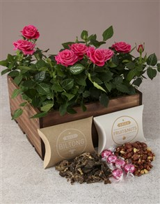 plants: Pink Paradise Rose Bush Hamper!