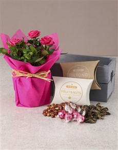 plants: Rose Bush Hamper Of Delights!