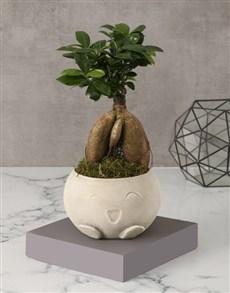 plants: Blissful Bonsai in Cement Pot!