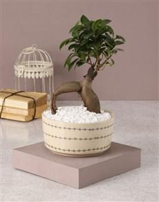 plants: Elegant Ficus in Heart Bowl!