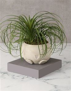 plants: Perfectly Playful Ponytail Palm!