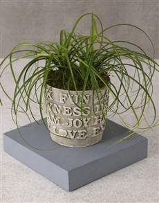plants: Ponytail Palm Of Joy!