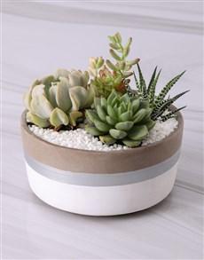 plants: Elegant Cactus and Succulent Mix!