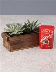 plants: Sweet and Succulent Chocolate Combo!