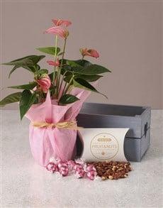 flowers: Pink Anthurium Gourmet Crate!