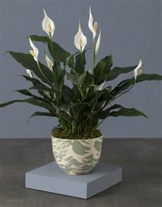 flowers: Artsy Spathiphyllum Pot Plant!