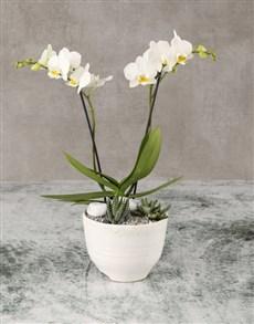 plants: Opulent Orchids And Sweet Succulents!