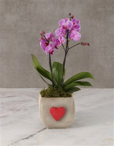 plants: Pretty Pink Orchid In Heart Pot!
