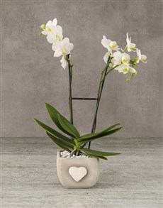 plants: Whimsical White Orchids!
