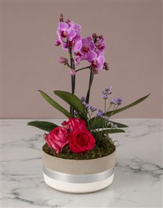 plants: Gardens Of Beauty Orchid!