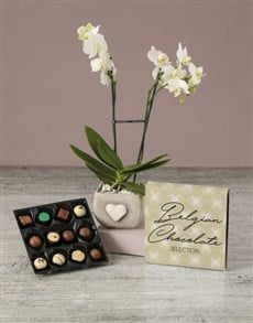 plants: Lovely Orchid With Chocs!