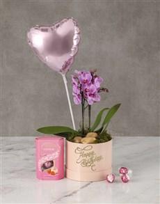 plants: Brilliant Blush Orchid Hat Box!