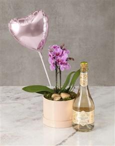 plants: Sensational Surprise Orchid Hat Box!