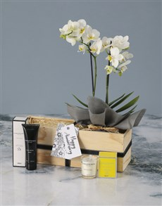 plants: Luxurious White Orchid Wonder!