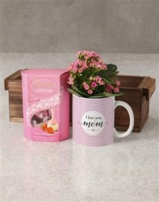 plants: Love You Mom Kalanchoe Mug Gift!