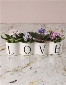plants: Foursome Of African Violets!