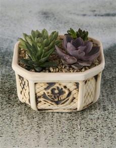 flowers: Mini Succulent Garden!
