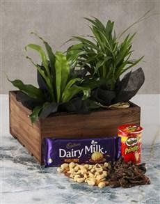 gifts: Asplenium Snack Love Crate!
