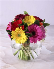 flowers: Gerbera Daisies in a Small Bowl Vase!