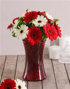 flowers: Red and White Love Gerbera Daisies in Red Vase!
