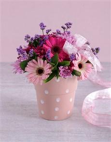 flowers: Pink Gerbera Blooms!