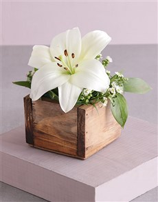 flowers: Pure Lily Blossoms!