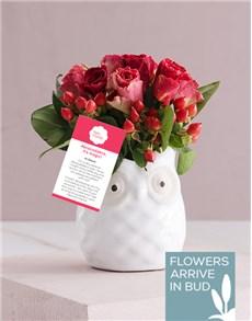 flowers: Owl Pot Abracadabra Roses!