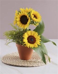 flowers: Sunflower Lollipop Tree!