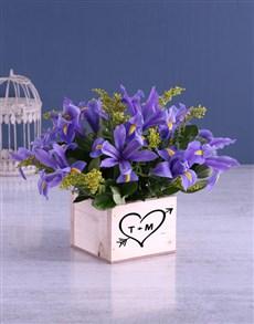 flowers: Blue Irises In Cupid Wooden Box!