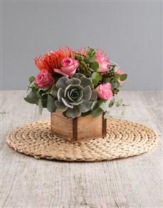 gifts: Succulent Protea Arrangement!