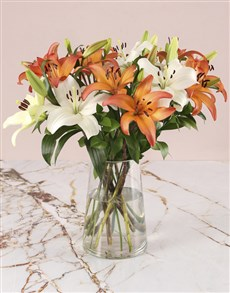 flowers: Asiflorum Sunset Lily Surprise!
