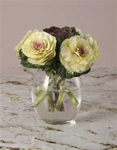flowers: Petit Mixed Kale Arrangement!