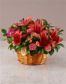 flowers: Abundance of Pink Petals!