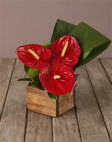 flowers: Timeless Beauty Anthurium Arrangement!