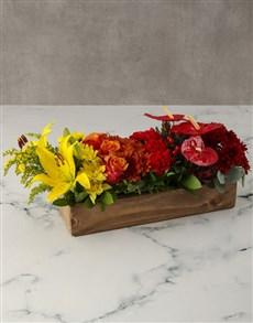 gifts: Box Of Rainbows Anthurium Arrangement!