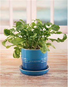 gifts: Marseille Le Creuset Planter!