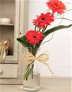 gifts: Stepped Red Gerbera Arrangement Petite!