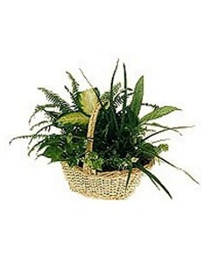 flowers: Assorted Plant Arrangement!