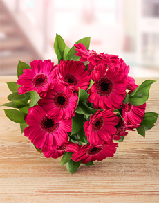 flowers: Cerise Gerbera Bouquet!