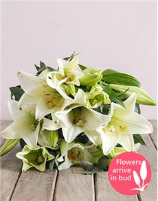 flowers: Divine Lily Blossoms!