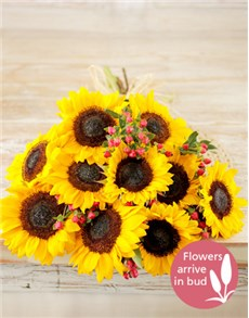 flowers: Bunch of Sunflowers!