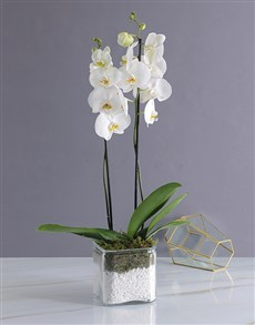 plants: Heavenly White Orchid!