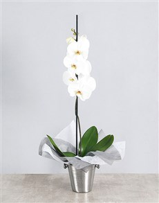 flowers: White Orchid Ice Bucket Gift!