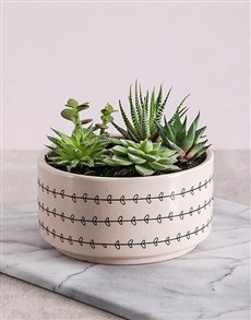 flowers: Cacti and Succulents in Love Leaf Bowl!