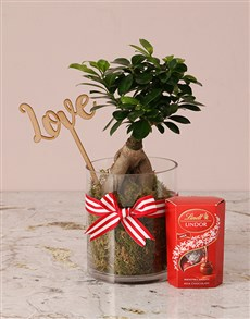 plants: Red Romance Ficus Bonsai Tree!