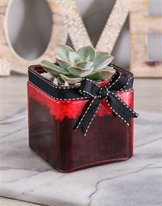 flowers: Valentines Mini Succulent Vase!