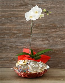 flowers: Orchid and Ferrero Basket with Mixed Nuts!