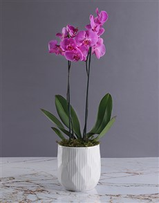 flowers: Double Pink Orchid in White Ripple Pot!