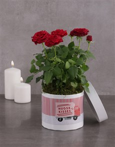 gifts: Hugs And Kisses Red Rose Bush!