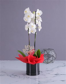 gifts: Romantic Orchid in Hatbox!